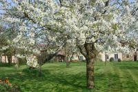 cerisier-gite